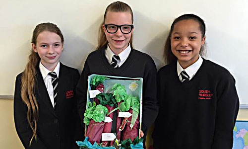 Geography Rainforest Competition